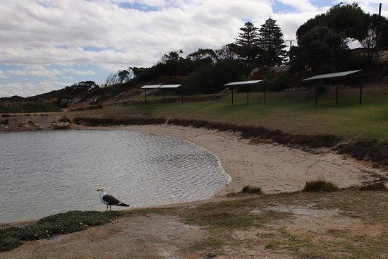 Kingscote, Australia: Fun for swimming