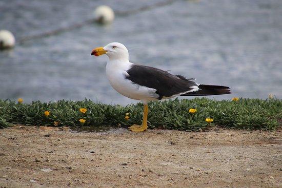 Kingscote, Australia: A seagull was watching us