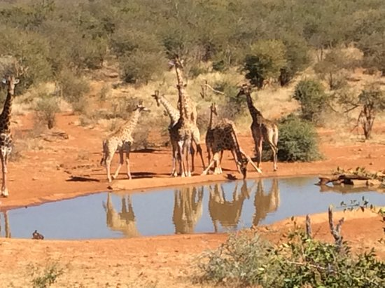 Etali Safari Lodge: Our watering hole right in front of the lodge