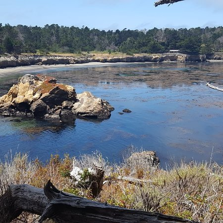 Point Lobos: IMG_20180705_135254_250_large.jpg
