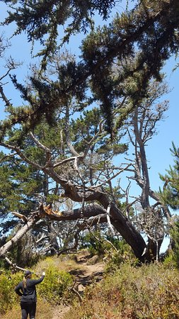 Point Lobos: 20180705_122049_large.jpg
