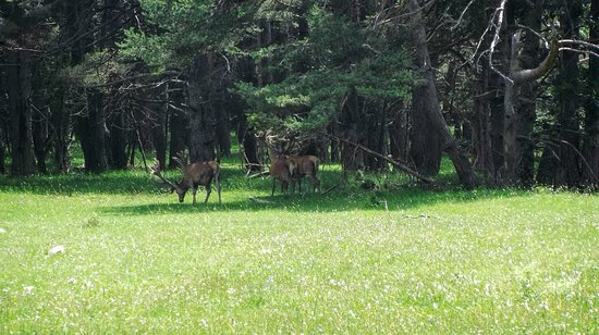Thorenc, France: Cervos
