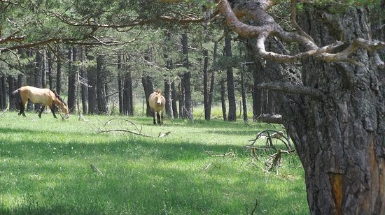 Thorenc, France: Os cavalos
