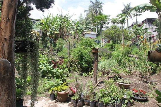 San Lucas Toliman, Guatemala: The organic garden