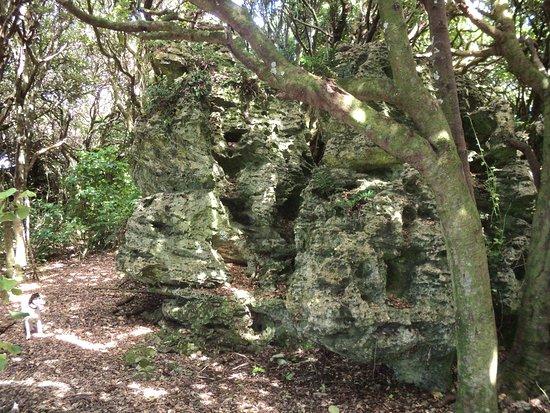 Henga Scenic Reserve