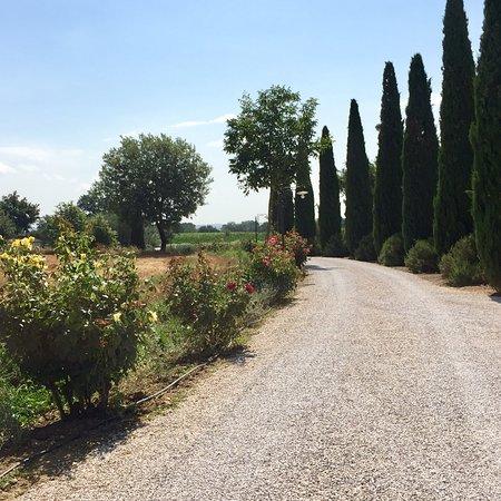 Abbadia di Montepulciano, Italy: photo6.jpg