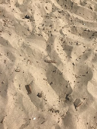 west beach indiana dunes lots of small and large splintered pieces rh tripadvisor com