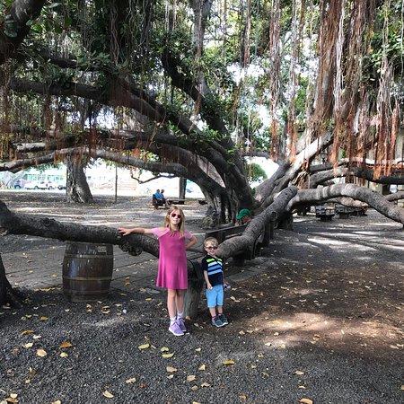 Banyan Tree Park: photo1.jpg