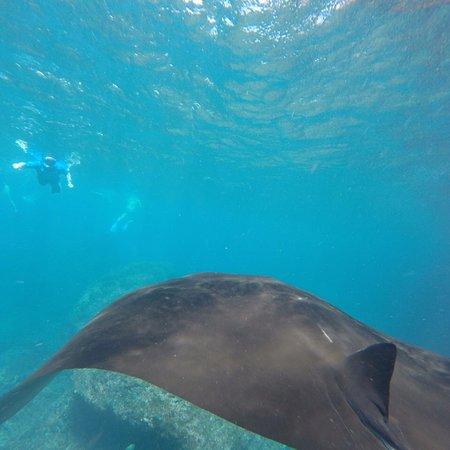 Lembongan Snorkeling Trips照片
