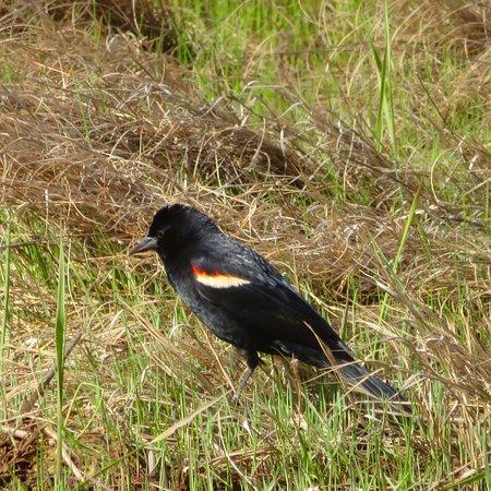 Parker River National Wildlife Refuge Picture