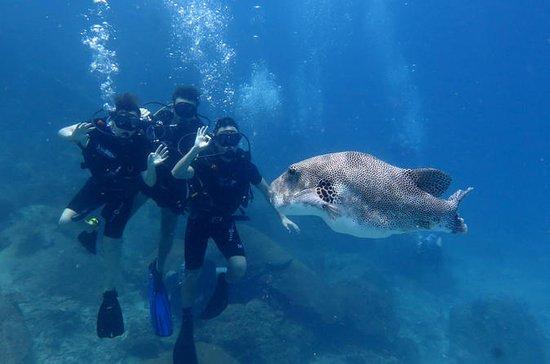 Oppdag dykking