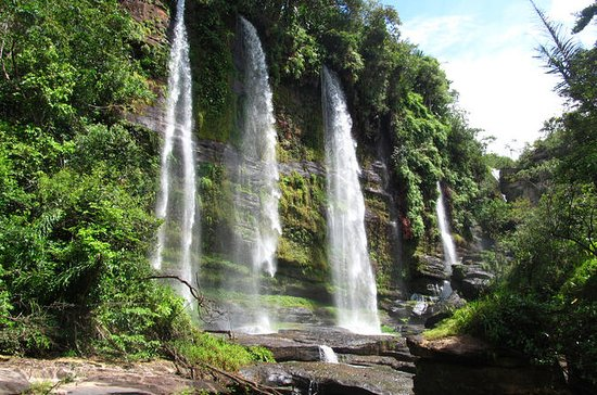 4-Day Jungle Tour to the Amazon from...