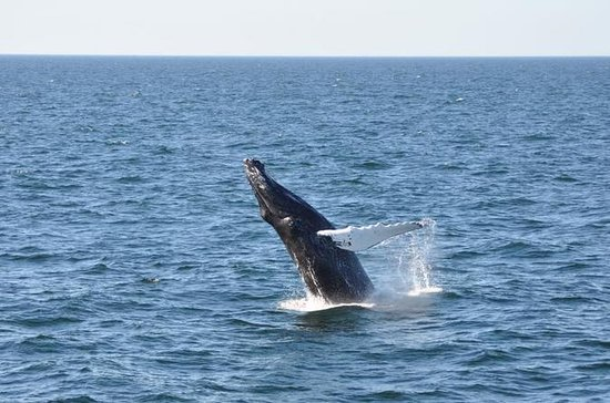 Whale Watch from Provincetown