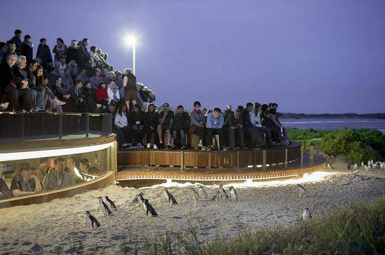 Premium Penguin Express Tour from...