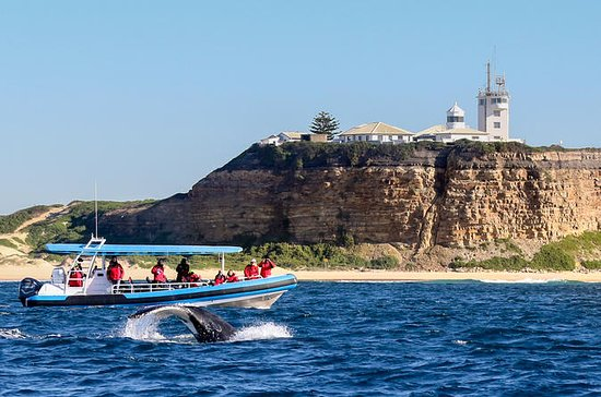 Humpback Whale Encounter Tour from...