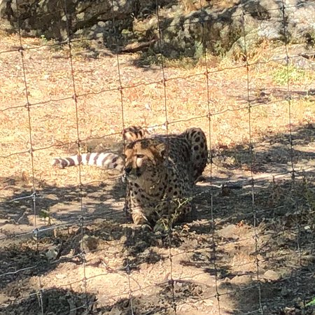 Ardeche, Francia: Quelques animaux du parc