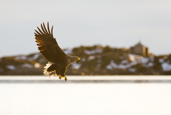 Smola Municipality, Norwegen: Eagles and old houses