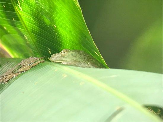 Costa Rica Jade Tours Photo