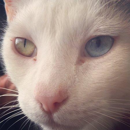 Canalicchio Di Sopra: The odd-eyed cat, the private terrace and the swimmingpool!