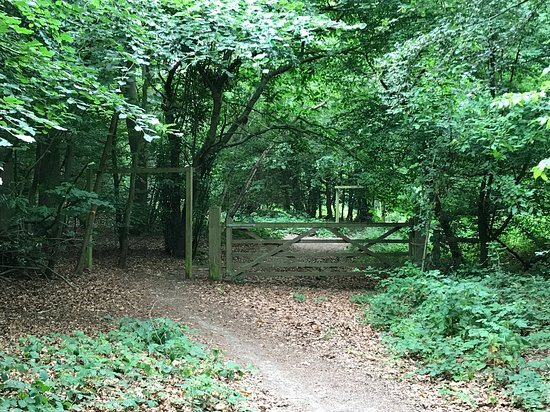 Carpenters Wood