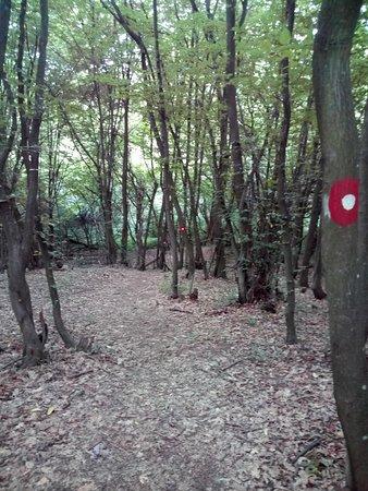 Loznica, Serbia: staza kroz kroz šumu