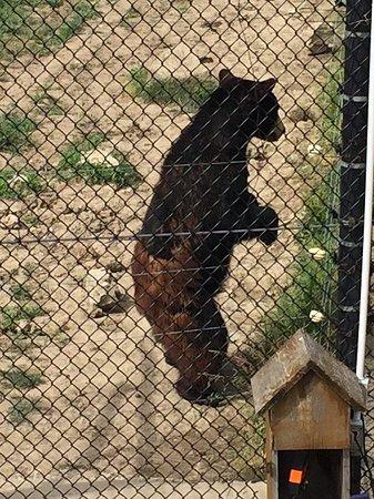 Stevensville, Canadá: Bear with 'pants'!!