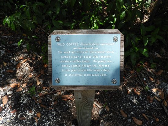 Dagny Johnson Key Largo Hammock Botanical State Park: one of the posts
