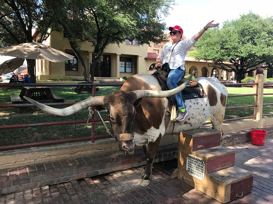 Discover Dallas Tours: Photo op at the Fort Worth Stockyards!
