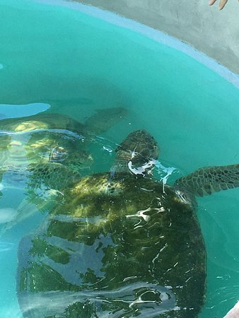 Bermuda Aquarium, Natural History Museum & Zoo: Don't miss the sea turtles outside on your way to the Hamilton bus station