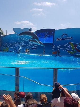 Zoomarine Algarve - Theme Park: 20180711_112717_large.jpg