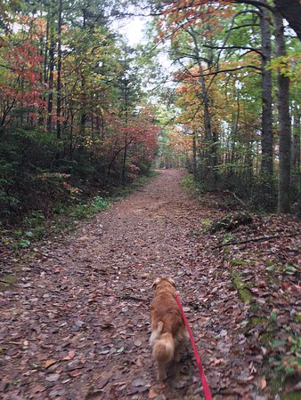 Catawba, VA: mcAfee knob's trail (fire road): easier trail