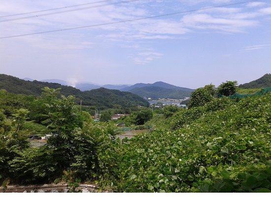 Chilgok-gun, South Korea: Un feu de forêt s'est déclenché le 23 juin 2018 vers 13h