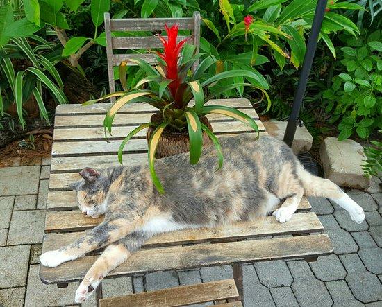 Wilton Manors, FL: Resident cat