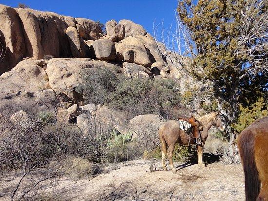 Portal, AZ: Trail Lunch Break.