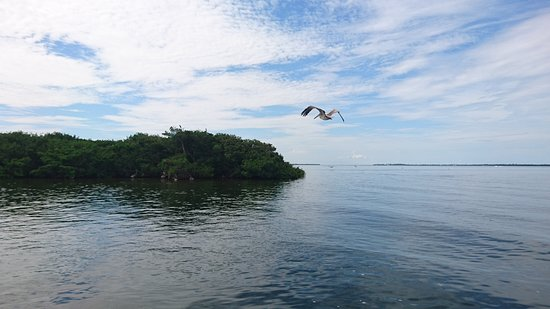 Gasparilla Boat Tours照片