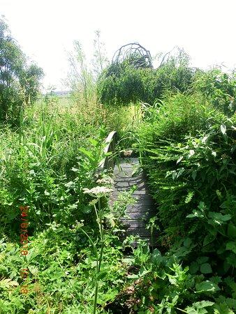 Mill Farm Garden