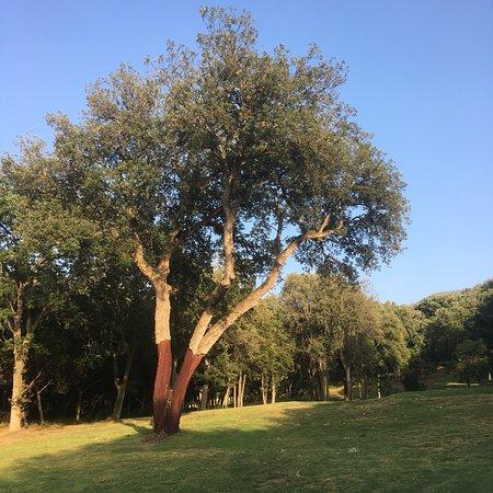 Golf Club Punta Ala: photo5.jpg
