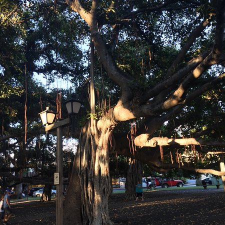 Banyan Tree Park: photo3.jpg