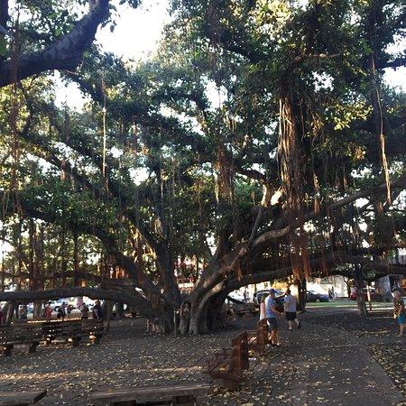 Banyan Tree Park: photo4.jpg