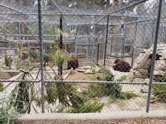 Big Bear Alpine Zoo at Moonridge: 20180710_104101_large.jpg