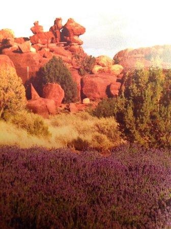 Concho, AZ: Lavender and red rocks