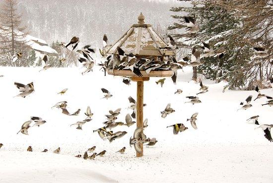 Sils-Segl Maria, Switzerland: Alle Gäste sind bei uns willkommen....