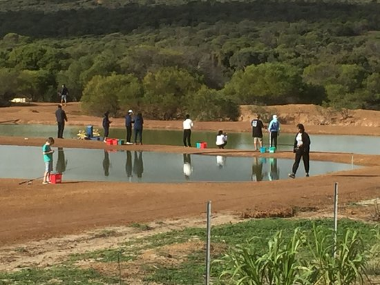Geraldton, Austrália: Silver Perch & Black Bream Pond