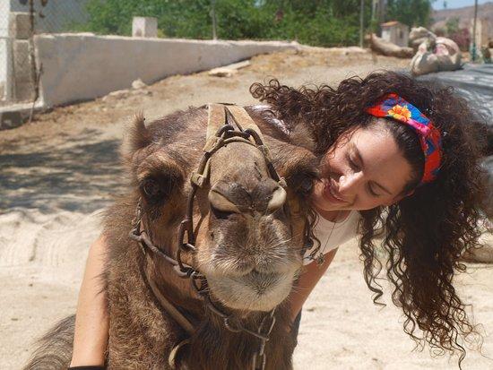 Camellos de Almeria