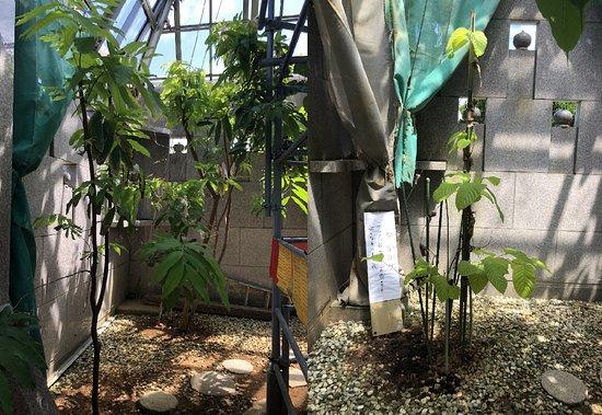 Okinawa Maha Bodhi Garden