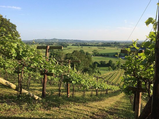 Fenny Castle Vineyard