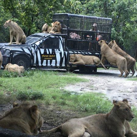 Thoon Bangkok Taxi: Safari world in Thailand  With. Thoonbangkoktaxi.com +66817033985 Whatsapp,