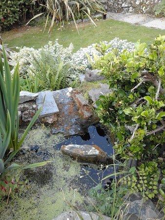 Blue Hayes Hotel: Garden