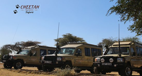 Cheetah Revolution Safaris