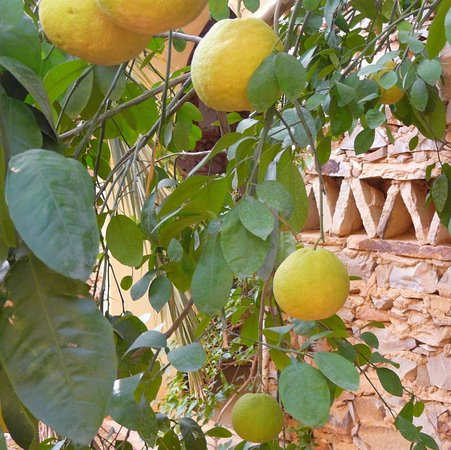 Chinguetti, Mauretania: Patio